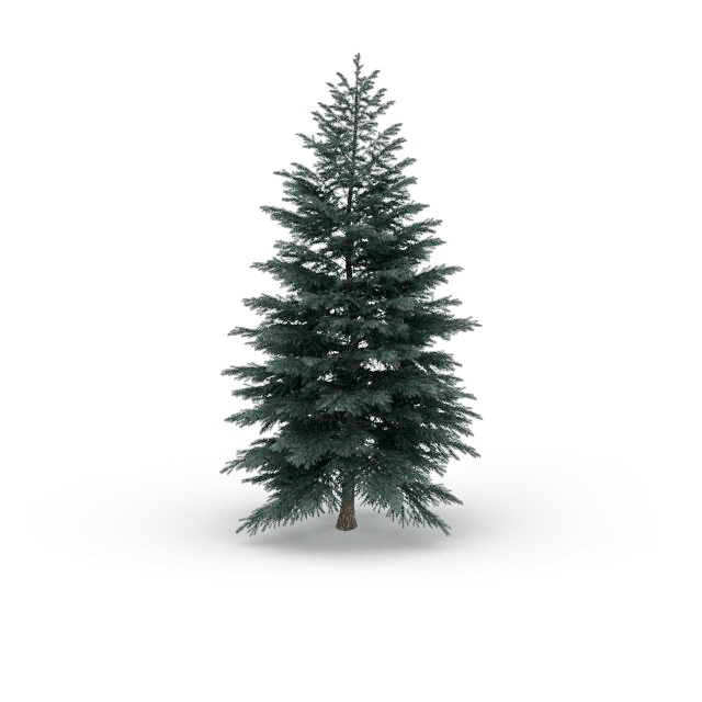Blue Spruce Tree 3d Model 3ds Max Files Free Download