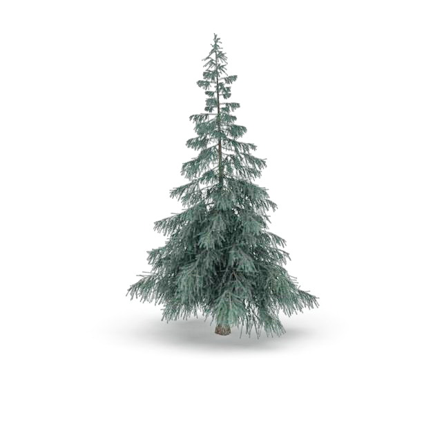 Colorado Spruce Tree 3d Model 3ds Max Files Free Download