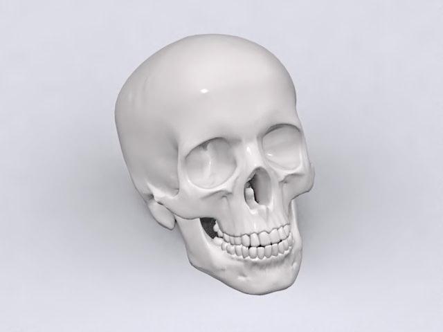Adult Human Skull 3d Model 3ds Max Lightwave Files Free