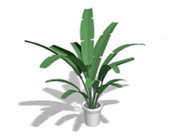 Potted banana tree 3d preview