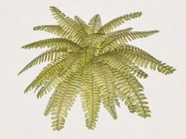 Fern houseplant 3d model