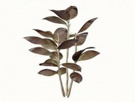 Ornamental rubber plant 3d model