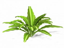Variegated century plant 3d model
