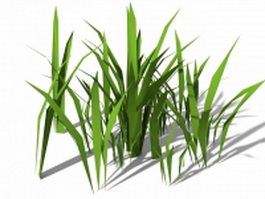 Stout bamboo grass 3d model