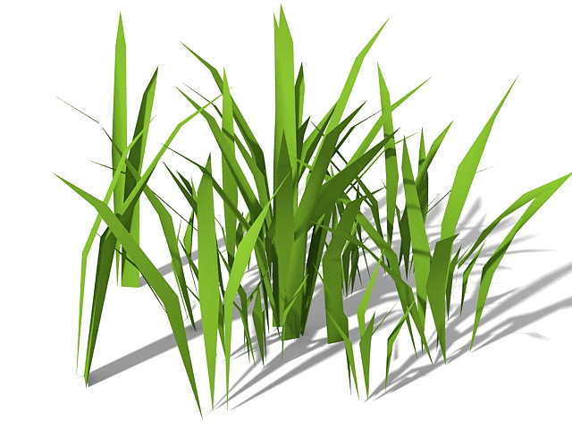 Stout Bamboo Grass 3d Model 3ds Max Files Free Download
