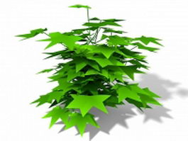 English Ivy 3d model