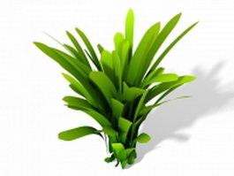 Dracaena fragrans plant 3d model
