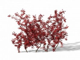 Burning bush plant 3d model