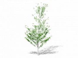 Weeping fig tree 3d model