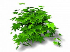 Maple shrub 3d model