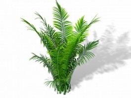Areca palm ornamental plant 3d model