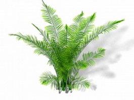 Ostrich fern plant 3d model