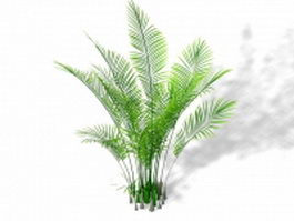 Ostrich fern ornamental plant 3d model