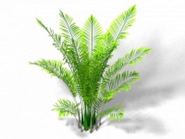Areca palm houseplant 3d model