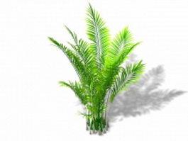 Areca palm plant 3d model