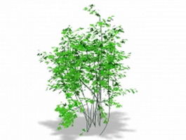 Bermuda Maidenhair fern 3d model