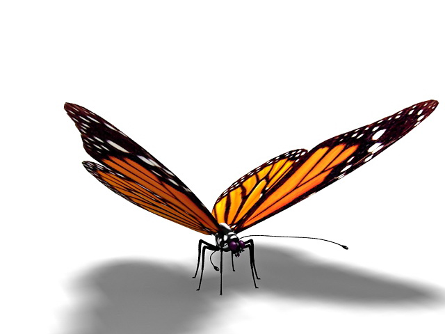 Orange butterfly 3d model 3ds Max files free download