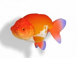 Hooded fancy goldfish 3d model