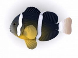 Seychelles anemonefish 3d model