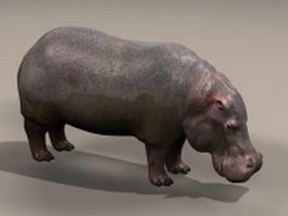 Common hippopotamus 3d model