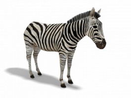 Plains zebra 3d model