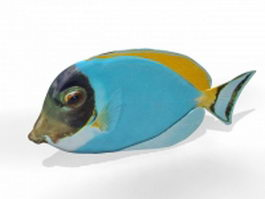 Marine aquarium fish 3d model