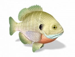 Bluegill sunfish 3d model