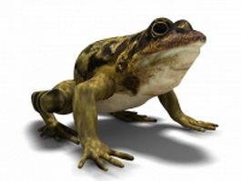 True toad 3d model