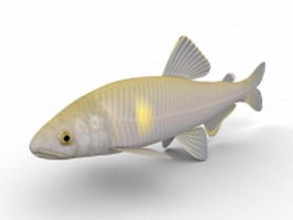 Sweet Ayu fish 3d model