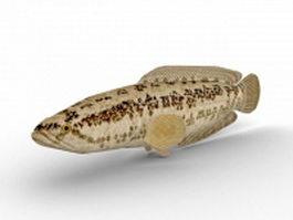 Pond loach 3d model