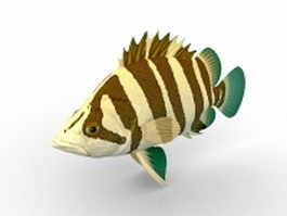 Asian siamese tigerfish 3d model