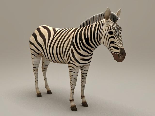 Africa Zebra 3d model