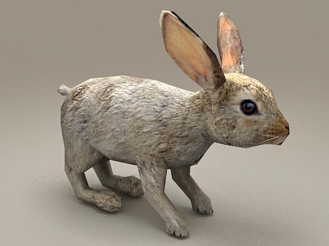 European Rabbit Low Poly 3d model