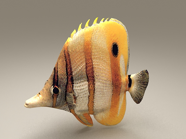 Beautiful Tropical Fish 3d model