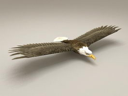 Bald Eagle Low Poly 3d model