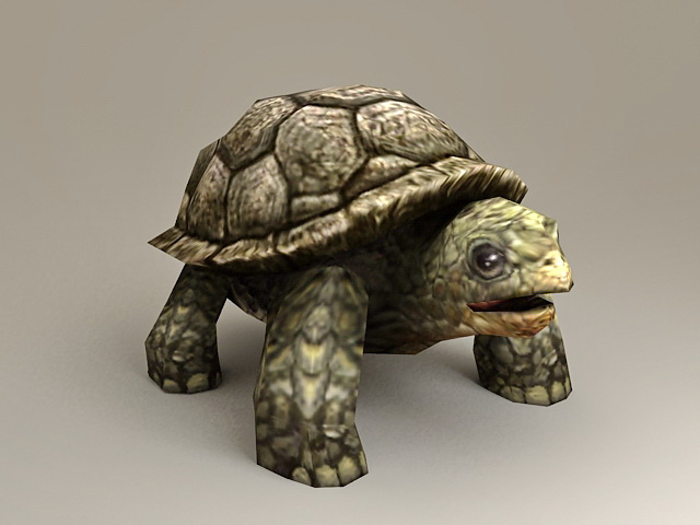 Large Sea Turtle 3d Model 3ds Max Files Free Download