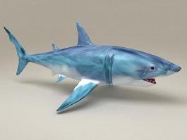 Atlantic Blue Shark 3d model
