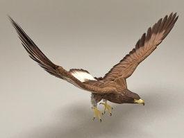 Goshawk Flying Rigged & Animated 3d model