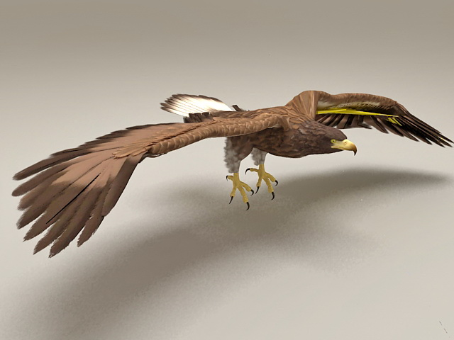 Goshawk Flying Rigged & Animated 3d model