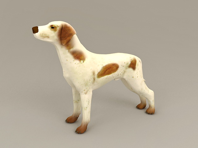 Brown and White Small Dog 3d model