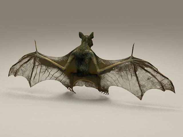 Bat Animal 3d Model 3d Studio Files Free Download