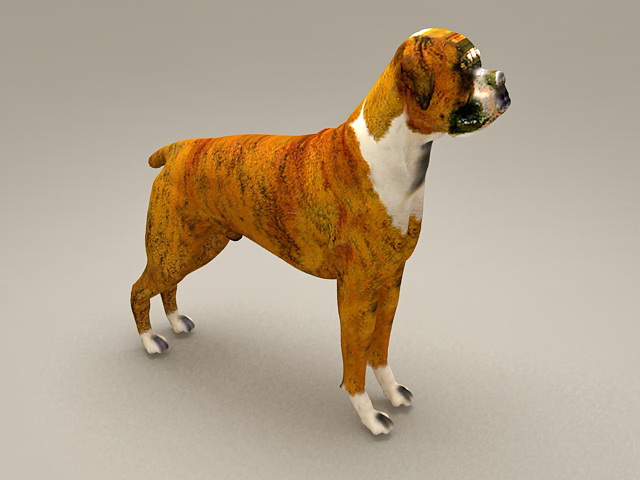 Boxer Dog Puppy 3d model