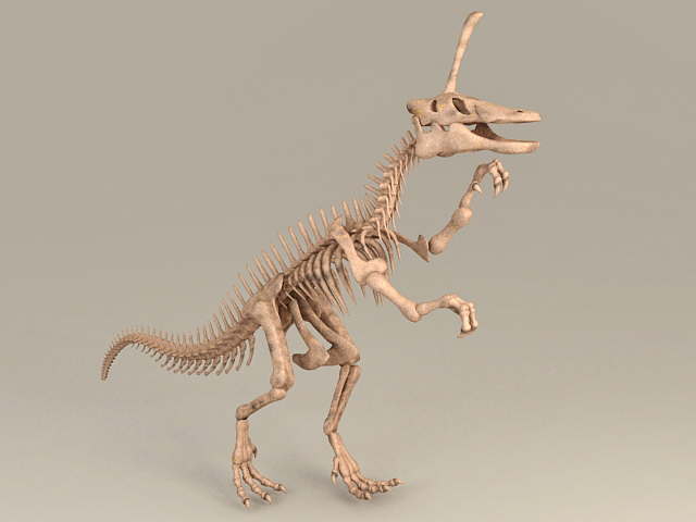 Skeleton Dinosaur Bones 3d model
