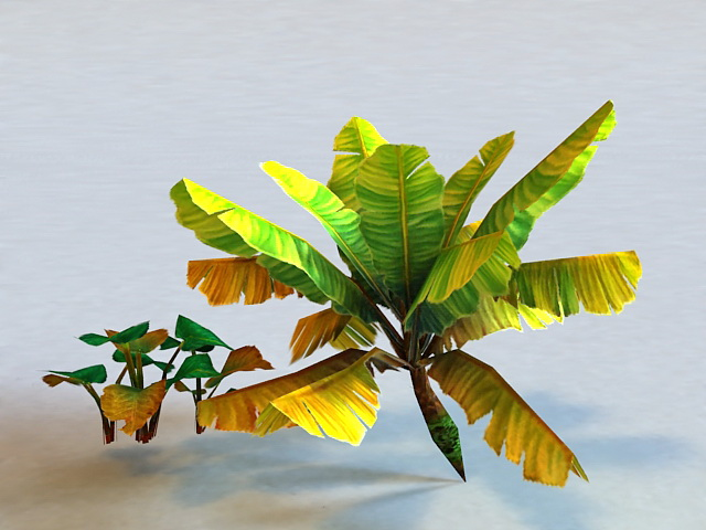 Tropical Plant Low Poly 3d model