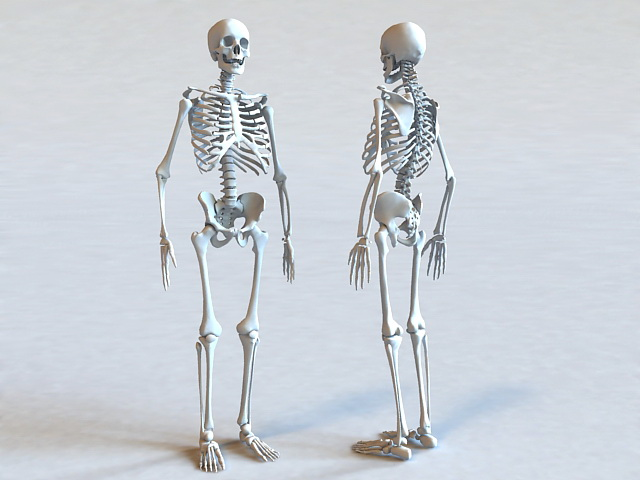 Human Skeleton Bone 3d model 3ds Max files free download ...