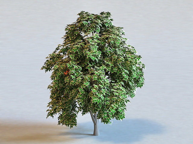 Sweet Chestnut Tree 3d model