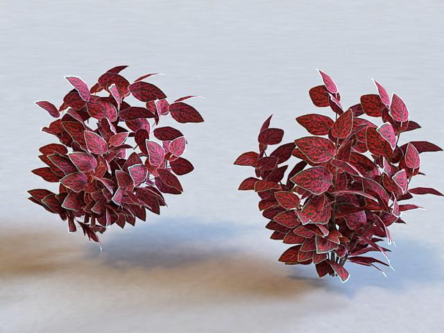 Polka Dot Plant 3d model