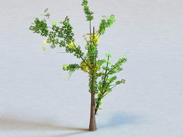 Generic Tree 3d preview