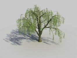 Weeping Willow Tree 3d preview