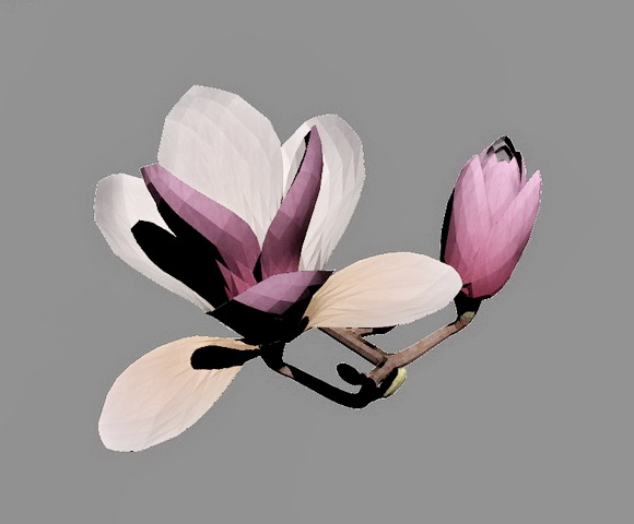 Magnolia Flowers 3d Model 3ds Max Files Free Download Modeling